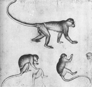 Пизанелло - наброски обезьян